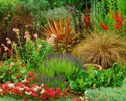 Садовые многолетние цветы