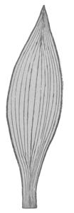 Лист ландыша